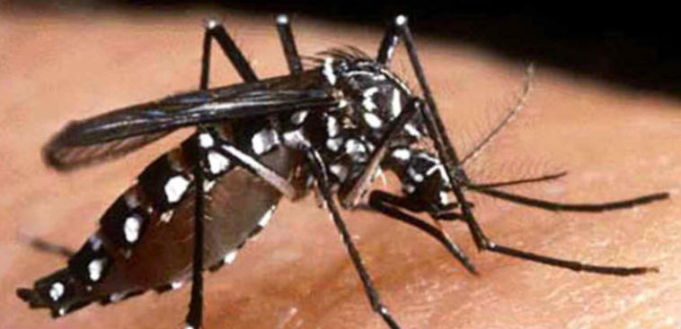 Dallas County Confirms First Travel-Related Case of Chikungunya for 2018
