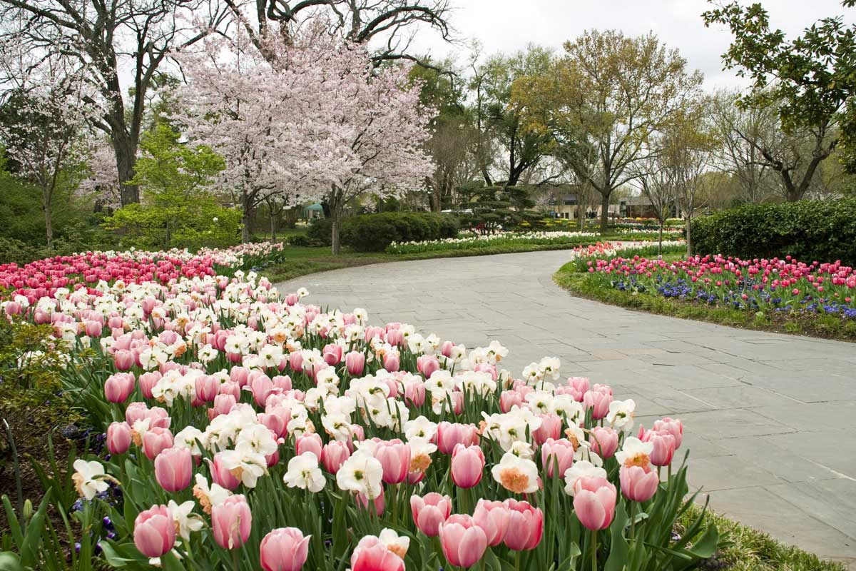 Dallas Arboretum Ranked Second Best Garden In The World Fort Worth News Newslocker