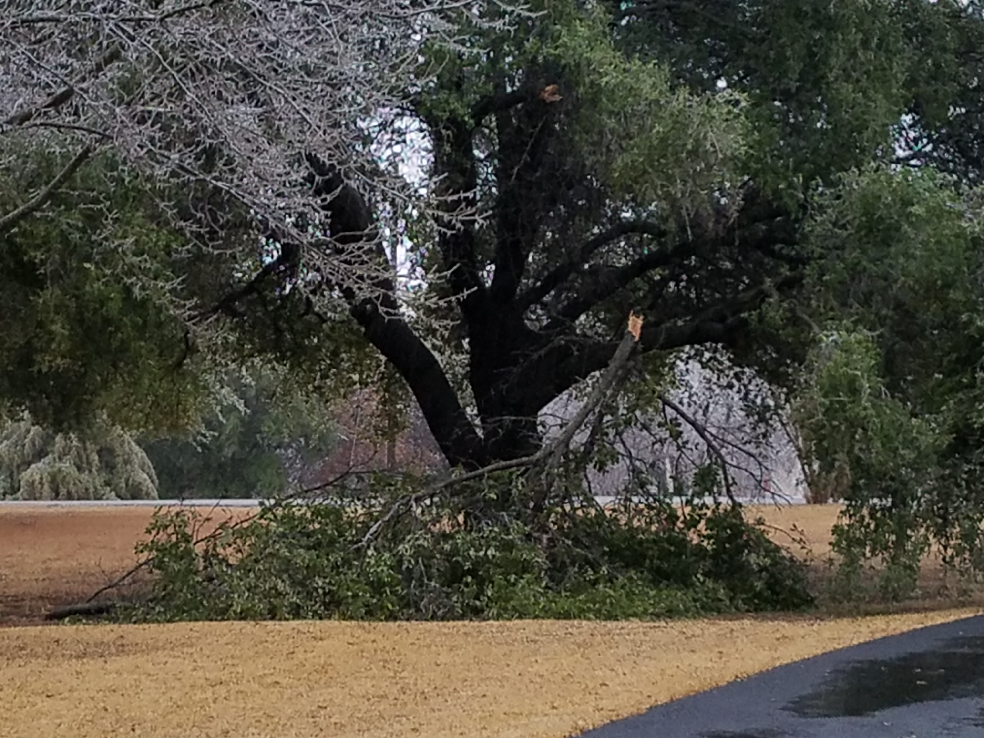 Save Your Trees, Prevent Deadly Oak Wilt