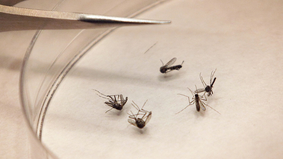 Irving Resident the Latest in Dallas Co. to Get West Nile